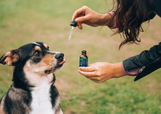3 Ways CBD Can Help Your Pets Live a Better Quality of Life
