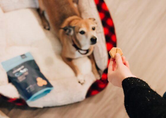 Best CBD Dog Treats