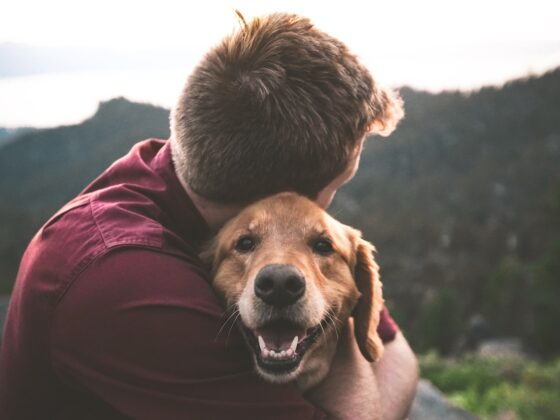 Help your Dog with CBD